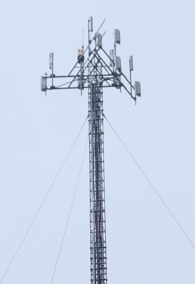 Guyed Towers Guyed Sr36 Top Pinwheel